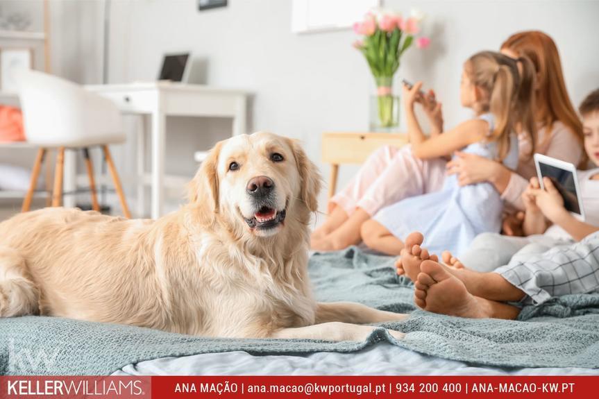 10 vantagens de ter um cão em casa